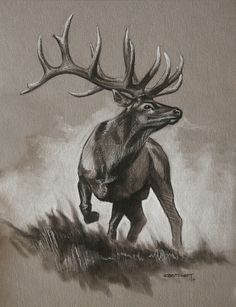 Bull Elk Original Sketch  cbstewart.com  Hunting, wildlife art