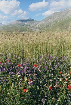 Monti Sibillini Umbria  Italia