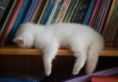 Tired little kitty....in the library! Cats must love books....there are so many pictures on Pinterest where they are sleeping amongst the books I guess that say's that they are bored with books....LOL