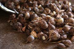 Kitchen Tip: How To Preserve Garlic