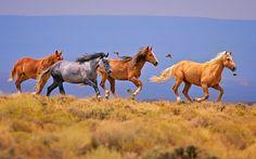 Диких лошадей изобилие Майкл Менфи на 500px