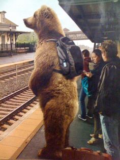 My favorite ad for the National Parks...love that bear and his backpack!!