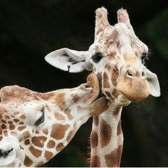 Awwww, animal love. Who says they have no feelings??
