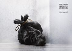 Foundation Tier im Recht: Dog | Ads of the World™
