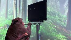 Neuralink Zihniyle Pong Oynayan Maymun Videosu Computer Chip, Gaming Computer, Motor Cortex, Implant, Play The Video, Delon, Aging In Place, Elon Musk, Movember