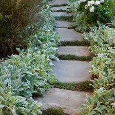 Flagstone Path with mondo grass