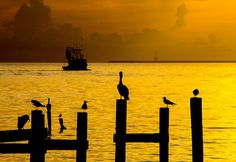 Galveston Bay - Pelican's Perch by TPorter2006, via Flickr
