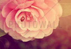 Ladybird on Camellia - Wall Mural & Photo Wallpaper - Photowall