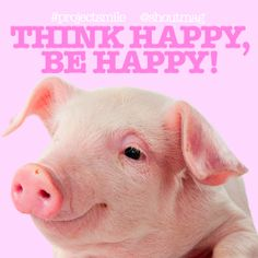 #SmileADay #ProjectSmile #ThinkHappyBeHappy #PositiveQuotes #CutePig