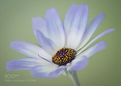 Senetti by TinaC #nature #photooftheday #amazing #picoftheday