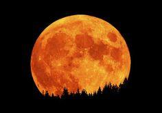 Sandhill Cranes, taking flight in a full moon - Pixdaus + Harvest Moon + Photograph + Nature + Black and Orange. Lune Orange, Orange Moon, Orange Orange, Beautiful Moon, Beautiful Scenery, Orange Aesthetic, Orange You Glad, Sun And Stars, Harvest Moon