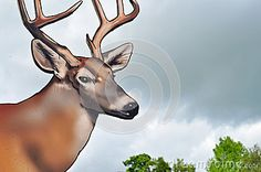 Deer With Antlers Wooden Sign - Download From Over 48 Million High Quality Stock Photos, Images, Vectors. Sign up for FREE today. Image: 41330888