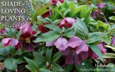 Plants that love shade, are incredibly hardy, come back year after year, AND are totally maintenance free!! All perennial... They are the easiest plants you can grow!