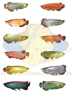 Everything About Exotic Fish and Aquariums Tropical Fish Store, Tropical Fish Tanks, Tropical Aquarium, Rare Fish, Exotic Fish, Aquariums, Oscar Fish, Dragon Fish, Exotic Pets