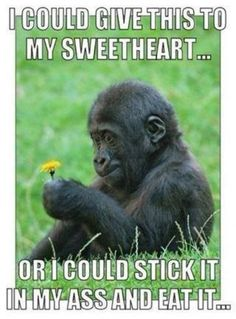 9a9f50e729be05dc1cfc8dd63aaa1f45 he loves me love me i could give this to my sweetheart ape meme www jokideo
