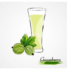 Gooseberry juice on VectorStock