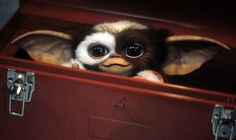 New 'Gremlins' movie is not a remake or reboot, says Zach Galligan | NME.COM