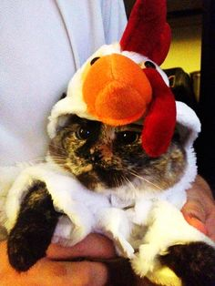 cat in a chicken suit, that is all.
