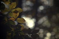 Début d'automne...