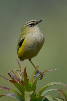 Rock Wrens. The photos from the second day when it was bright overcast truned…