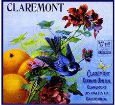 Claremont Citrus Union Bluebird Orange Citrus Crate Label Art Print - California Citrus Fruit Crate Label Art Prints - Fruit and Vegetable Crate Label Art Prints Vintage Advertisements, Vintage Ads, Vintage Ephemera, Vintage Clip, Vintage Dress, Label Art, Jam Label, Vintage Food Labels, Orange Crate Labels