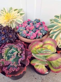 Types Of Succulents, Growing Succulents, Cacti And Succulents, Planting Succulents, Planting Flowers, Succulent Ideas, Dish Garden, Garden Art, Echeveria