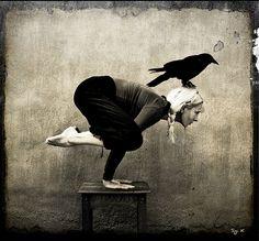 the crow // (Crane) posture is also known as the Crow posture in yoga. I prefer to refer to it as the Crow as the pose definitely looks more like a crow on a perch.By Sigi K ॐ Crows Ravens, Rabe, Ashtanga Yoga, Bikram Yoga, My Yoga, Yoga Art, Yoga Meditation, Yoga Flow, Stretching