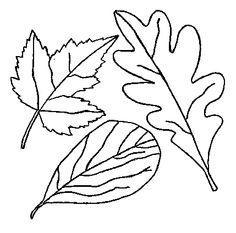 Google Image Result for http://0.tqn.com/d/gonewengland/1/0/1/C/leafcollage1.gif
