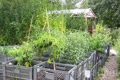 hortas organicas em estufas - Pesquisa Google