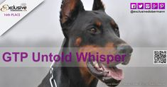 The Exclusive Dobermann beauty fashion contest 2018 ended last of March GTP Untold Whisper from ROMANIA with total votes 1868 position n. Fashion Models, Fashion Beauty, Beauty Contest, Fashion Advertising, Doberman, Whisper, Romania, Milan, Competition