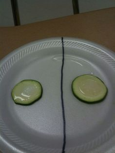 biology Showing osmosis with cucumber slices, salt and sugar Biology Experiments, Biology Lessons, Science Biology, Science Lessons, Science Education, Life Science, Cell Biology, Ap Biology, Biology Science Fair Projects