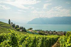 A cycletour through the vineyards of the Lavaux next to Montreux at the Lake Geneva. Lake Geneva, Vineyard, Mountains, Nature, Travel, Outdoor, Tours, Vine Yard, Outdoors
