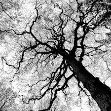 Tree Branching Patterns in Nature