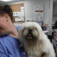 Fort Worth Tx Maltese Meet 38891863 A Dog For Adoption Dog