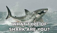 What type of shark are you? Shark Week '14!! I got hammer head!