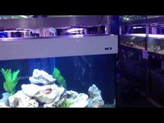 Aqua One Aquareef aquariums are great Cichlid tanks