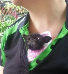 Australian Bat Clinic & Wildlife Trauma Centres foton. I want to work there!