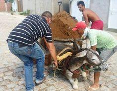 Os vizinhos do tutor do animal disseram que é rotina o jumento ser submetido ao peso excessivo.