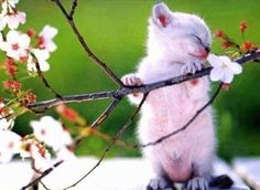 Cute kitten, sniffing the blossom of the flowers.