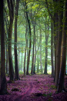 ◦☼✩◦ ♥ レ O √ 乇 ♥◦✩☼◦ ~ Friston Forest
