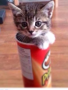 Funny Animal Pictures - View our collection of cute and funny pet videos and pics. New funny animal pictures and videos submitted daily. Cute Little Animals, Cute Funny Animals, Funny Dogs, Baby Animals, Wild Animals, Cute Kittens, Cats And Kittens, Tiny Cats, I Love Cats