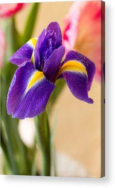Lovely Iris With Dew Drops Acrylic Print by Yana Reint. #YanaReint #YanaReintFineArtPhotography #FineArt #Canvas #Prints #Homedecor #Artforhome #Iris #lovely iris #flowers