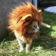 I want one! Such a fierce kitty!