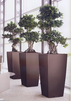 "This office atrium has a striking ""manage a trios"" Bonsai plants. More at officelandscpapes.co.uk"