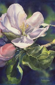 """Apple Blossom"" watercolour on paper. Watercolor Art Lessons, Funny Kids, Flower Art, Watercolors, Artist, Florals, Plants, Tutorials, Paintings"