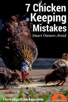 Chicken ownership is easy - and beginner mistakes are just as easy to avoid. There's 7 common mistakes that can lead to trouble down the road. Smart owners avoid them with these tips.