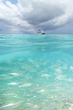 Half Moon Kay Bahamas snorkeling Cruise ship.. I've been here.. It's the best place I've been yet. Paradise is too little of a word! :0)