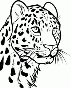 How to Draw a Leopard Head Step by Step Rainforest animals Animals FREE Online Drawing Tutorial Added by Dawn September 2 2013 am Animal Sketches, Animal Drawings, Drawing Animals, Pencil Drawings, Tattoo Leopard, Stencil Animal, Cheetah Drawing, African Wall Art, Wolf Silhouette