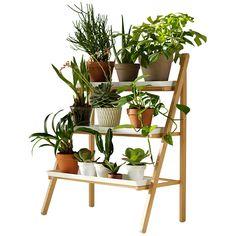 Kekkilä Pot ladder ($195) ❤ liked on Polyvore featuring home, home decor, floral decor, plants, fillers, flowers, decor, backgrounds, flower home decor and white flower pots