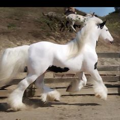 A Gorgeous gypsy horse. I have always adored horses with their own built in leg warmers.